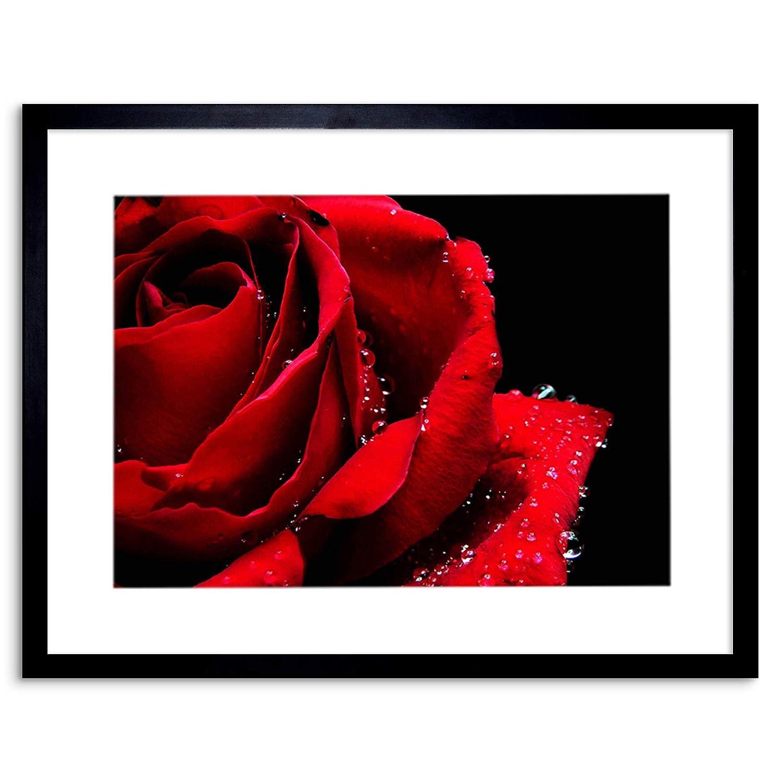 �9.���)�.�9l$yi��f-9�-�f�x�_photo nature plant 玫瑰红罗马风格家庭框架印画 f97x4248 黑色 9 x